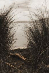 Through The Rushes  Wow - I love the beautiful light @grimalkinstudio captured here and the sepia toning is lovely. Such a tranquil scene! #SepiaPrints #landscape #Nature