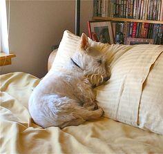 Dougal taking a Sunday nap