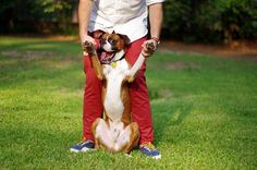 Happiness is a Boxer doggie!