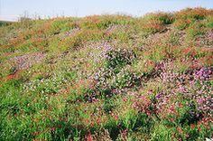 Walburg Wildflowers 2009