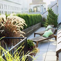 PRIVACY.   One of the issues with balcony or rooftop gardening is privacy.   A wall of cedar shrubs effectively provides peace and solitude in this busy downtown environment.