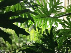 Instagram Post By Pistils Nursery Jun 30 2016 At 6 31pm Utc Succulent Hanging Planterhanging Plantersshades Of Greenindoor