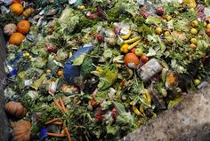 News Article:Food waste harms climate, water, land and biodiversity – new FAO report French Supermarkets, Imperfect Produce, Seattle, Edible Food, Leftovers Recipes, Food Waste, Fruit And Veg, Served Up, Science And Nature