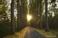 De Dordtse Biesbosch