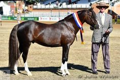 A proud Keith Robin is pictured with his Champion Stallion and Supreme Champion Welsh Pony Exhibit, 'Amranda Horatio' (Imperial Jaguar/Derralee Honeysuckle)