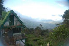 Felidia, Valle del Cauca, Colombia