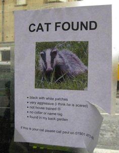 Cat Found lol