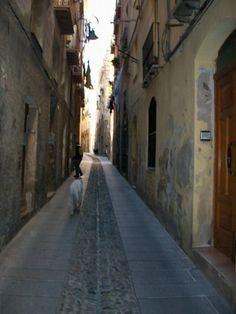 Lone dog on Sardegna street