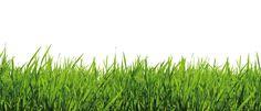 Fototapete Gras (Nr. 6637)  www.berlintapete.de