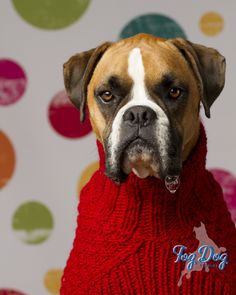 I blow bubbles.  Dogs in Clothes #dogsinclothes Doggie Clothing #Puppy #Dog Boxer Puppy Dogs