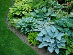 Shade Garden With Hostas : Caring Hostas In The Fall Season