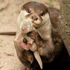 Proud mama otter
