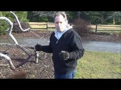 ▶ How To Prune A Tree - Back To Eden Garden - L2Survive with Thatnub - YouTube