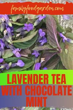 """From the calming herbal teas, lavender is definitely at the top of the list. If you are a chocolate lover as well then Family Food & Garden has an awesome tea combination you want to check out - lavender tea with chocolate mint. We found this recipe in a wonderful book called """"Harvest, Unexpected Projects Using 47 Extraordinary Garden Plants"""" by Stefani Bittner and Alethea Harampolis. Check it out here… #lavendarteawithchocolatemintrecipe #harvestbybittnerandharampolis #lavenderteas Summer Drinks, Fun Drinks, Healthy Fruits And Vegetables, Lavender Tea, Mint Tea, Tea Blends, Mint Chocolate, Herbal Teas, Garden Plants"""