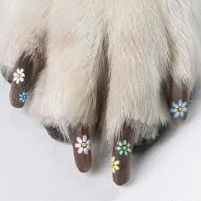 dog's painted nails