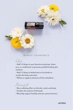 In ancient Rome, Roman Chamomile was used to help soldiers take courage during times of war. Since then, Roman Chamomile essential oil has become popular for its sweet, soothing nature. Doterra Roman Chamomile, Chamomile Oil, Chamomile Essential Oil, What Are Essential Oils, Essential Oil Safety, Essential Oil Blends, Oil Benefits, Health Benefits, Oil Uses