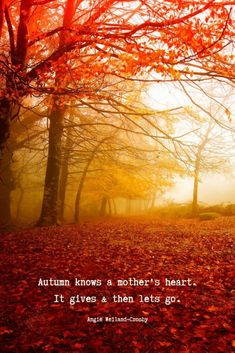"""16 Autumn Quotes to Enchant and Deepen the Soul - motherhood quote with trees and fallen red leaves…""""Autumn knows a mother's heart. Winter Quotes, Fall Quotes, Leaf Quotes, Season Quotes, Solar, Magic Quotes, Deep Autumn, Autumn Fall, Autumn Scenes"""