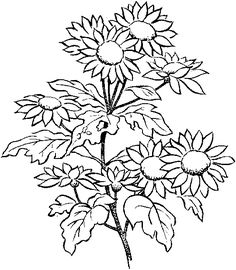 flower coloring pages growing flowers