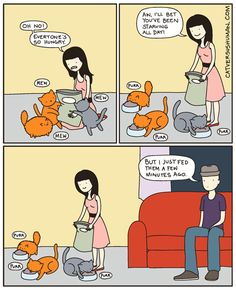 Cat vs Human (And I always fall for it)