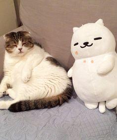 End Tubbs Hate — carudamon119:   どんぐり @akihimatandon11...