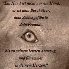 Zeit Des Abschieds Tiere Verstehen Com Tierkommunikation Tierpsychologie Energetik Tierkommunikation Hunde Hund Zitat