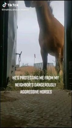 Funny Horse Quotes, Funny Horse Videos, Funny Horses, Funny Animal Jokes, Cute Horses, Pretty Horses, Horse Love, Cute Funny Animals, Most Beautiful Horses