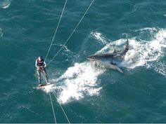 Near fatal shark attacked avoided by seconds caught on cam and the guy didnt even know till afterwards