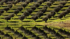 Landscapes trees portugal lakes reflections fruit (1366x768, trees, portugal, lakes, reflections, fruit)  via www.allwallpaper.in