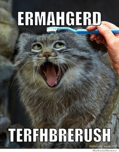 Google Image Result for http://cdn.smosh.com/sites/default/files/bloguploads/derpiest-ermahgerd-toothbrush-cat.jpg