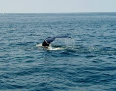 "We call it ""whale watching"", and that's fantastic. -Cape Code, United States of America-"