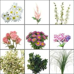 Wholesale Blooms Classy Thinkin' Pink Wildflower Pack - Pink & White Wildflowers - Blooms by the Box