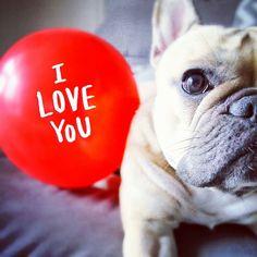 True love #french #bulldog #yummypets