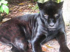 Travel to Belize. Assist the Caribbean Wildlife Centre in the process. Click image for more info.