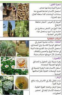 ملف النباتات إيقاظ علمي س2 موارد المعلم Fruit Food Cantaloupe