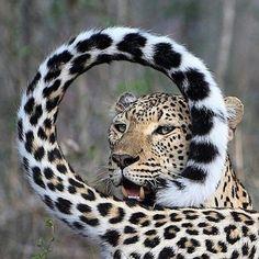 DON JURAVIN - YouTube Wildlife Nature, Nature Animals, Animals And Pets, Cute Animals, Strange Animals, Wildlife Photography, Animal Photography, Wild Lion, Leopard Animal