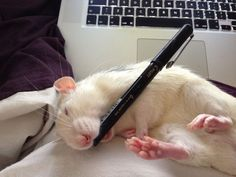 Pascal sleeps ~ Let him sleep; for when he wakes up he shall write volumes.
