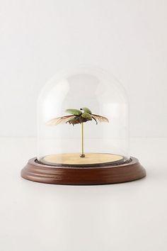 Hitherto beetle globe