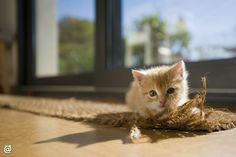 Meow! #cuties #fluffy #cat #beautiful