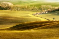 """""""Early spring"""" by Marcin Sobas, via Early Spring, Trees To Plant, Fields, Beautiful Places, Paradise, Scenery, Country Roads, Ocean, River"""