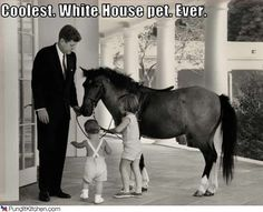 John F. Kennedy and children John Jr. and Caroline pose with Macaroni the pony, a popular fixture during the Kennedy administration. She was Caroline Kennedy's faithful steed. (Library of Congress) Jackie Kennedy, Jaqueline Kennedy, Political Pictures, Familia Kennedy, John Junior, Jfk Jr, Dressage Horses, Rare Pictures, Animal House