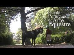 Portuguese School of Equestrian Art | EPAE [dressageportugal]