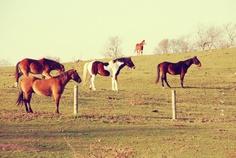 #myphotography #horses #montauk