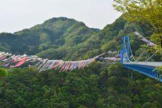 竜神大吊橋の鯉のぼり 2014.5