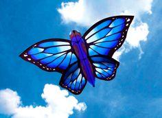 Butterflies and Bugs : World Wind Kites, iKite