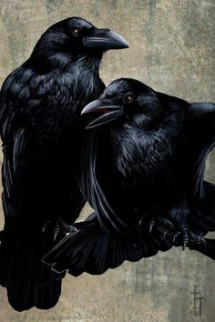 """""""Ravens - Pen, Ink and Gouache"""" Drawing by Christian Hammer posters, art prints, canvas prints, greeting cards or gallery prints. Find more Drawing art prints and posters in the ARTFLAKES shop. Crow Art, Raven Art, Bird Art, Gouache, Hugin Munin Tattoo, Rabe Tattoo, Quoth The Raven, Vegvisir, Jackdaw"""