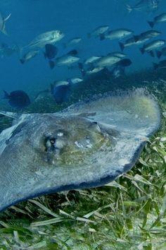 Hol Chan Marine Reserve, Belize - best caribbean snorkeling spots ambergris belize v