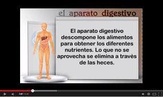 El jueves hemos visto el aparato digestivo. Lo primero como siempre ver el vídeo de Eduteca .        Después del vídeo, hemos visto lo que d...