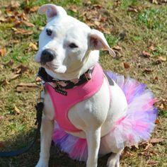 Princess dog tutu by Binxie Pet Boutique