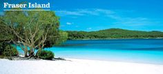 Fraser Island is a fantastic island to visit when in Australia. It has an amazing nature and wildlife. A must when down under.
