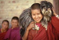 Tibetan Dog Monastery. Info here: http://www.margaretcho.com/2004/06/29/tibetan-dog-monastery/